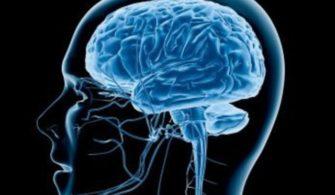 Yağ Yakımını Tetikleyen Beyin Hormonu