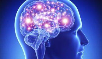 Beynin Beyni: Prefrontal Lob